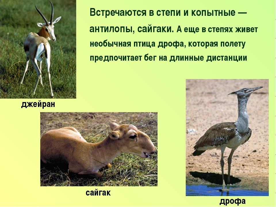 Встречаются в степи и копытные — антилопы, сайгаки. А еще в степях живет необ...