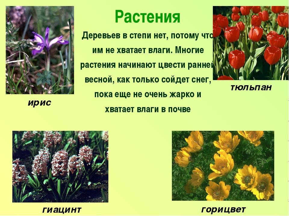 Растения Деревьев в степи нет, потому что им не хватает влаги. Многие растени...