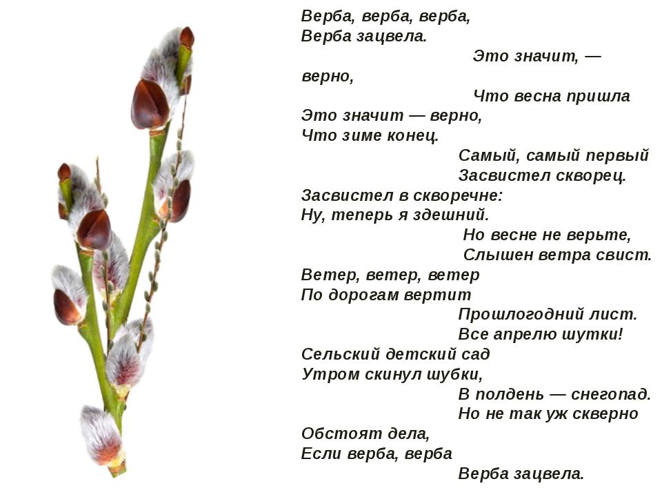 Подобрать рифму к слову дубы вербы весна красна почки листочки