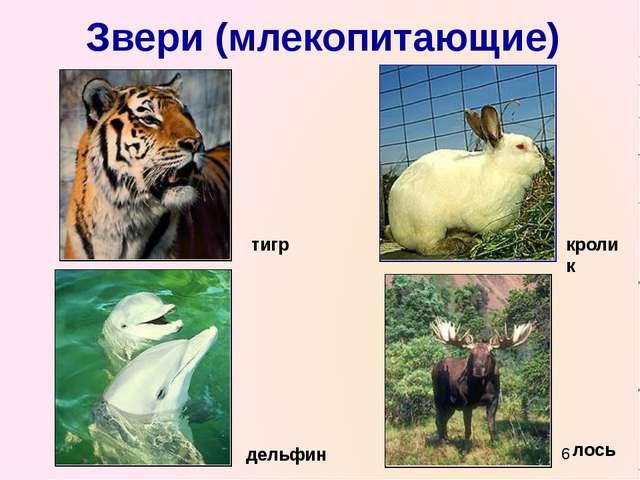 Звери (млекопитающие) тигр кролик дельфин лось