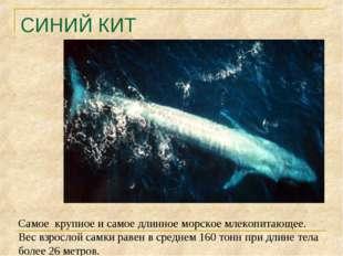 СИНИЙ КИТ Самое крупное и самое длинное морское млекопитающее. Вес взрослой с