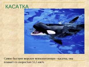 КАСАТКА Самое быстрое морское млекопитающее –касатка, она плавает со скорость