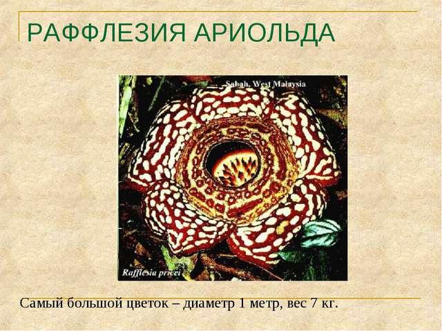 РАФФЛЕЗИЯ АРИОЛЬДА Самый большой цветок – диаметр 1 метр, вес 7 кг.