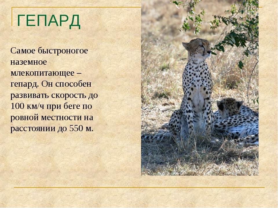 ГЕПАРД Самое быстроногое наземное млекопитающее – гепард. Он способен развива...