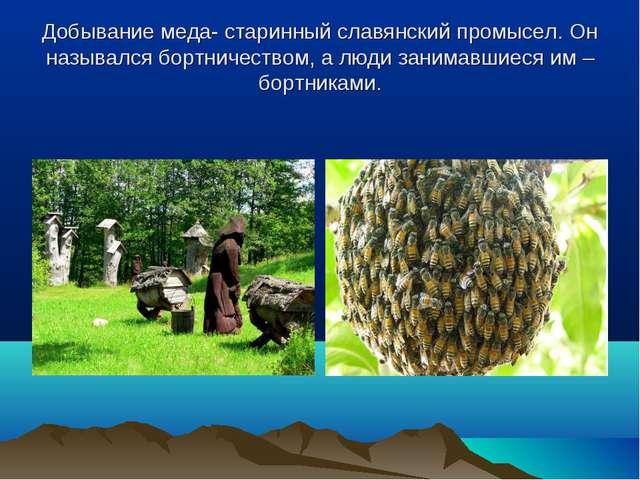 Добывание меда- старинный славянский промысел. Он назывался бортничеством, а...