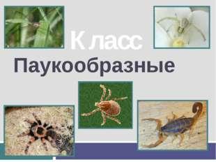 Паукообразные Класс