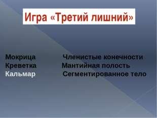 Мокрица Членистые конечности Креветка Мантийная полость Кальмар Сегментирован