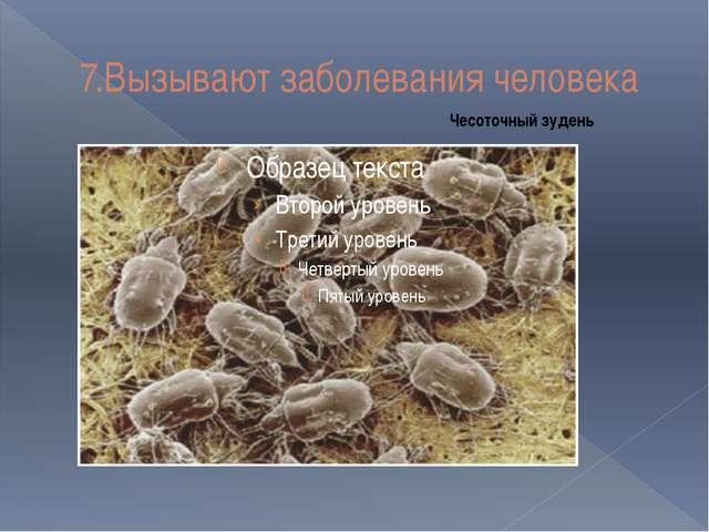 7.Вызывают заболевания человека Чесоточный зудень