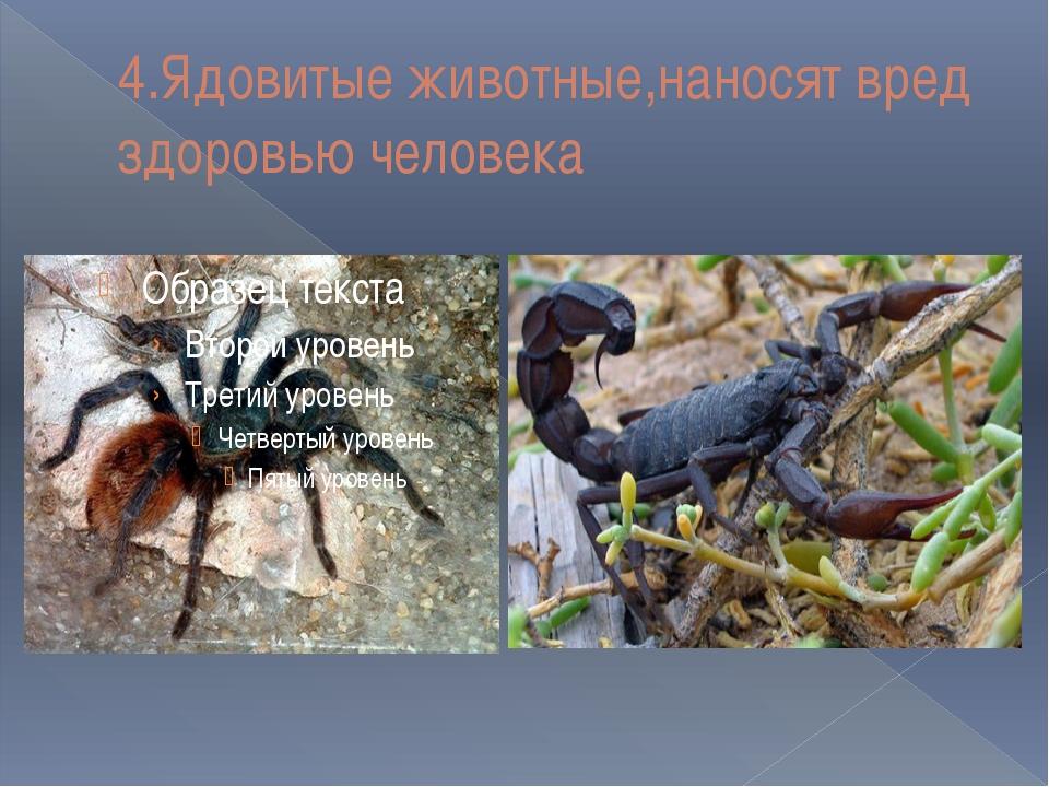 4.Ядовитые животные,наносят вред здоровью человека