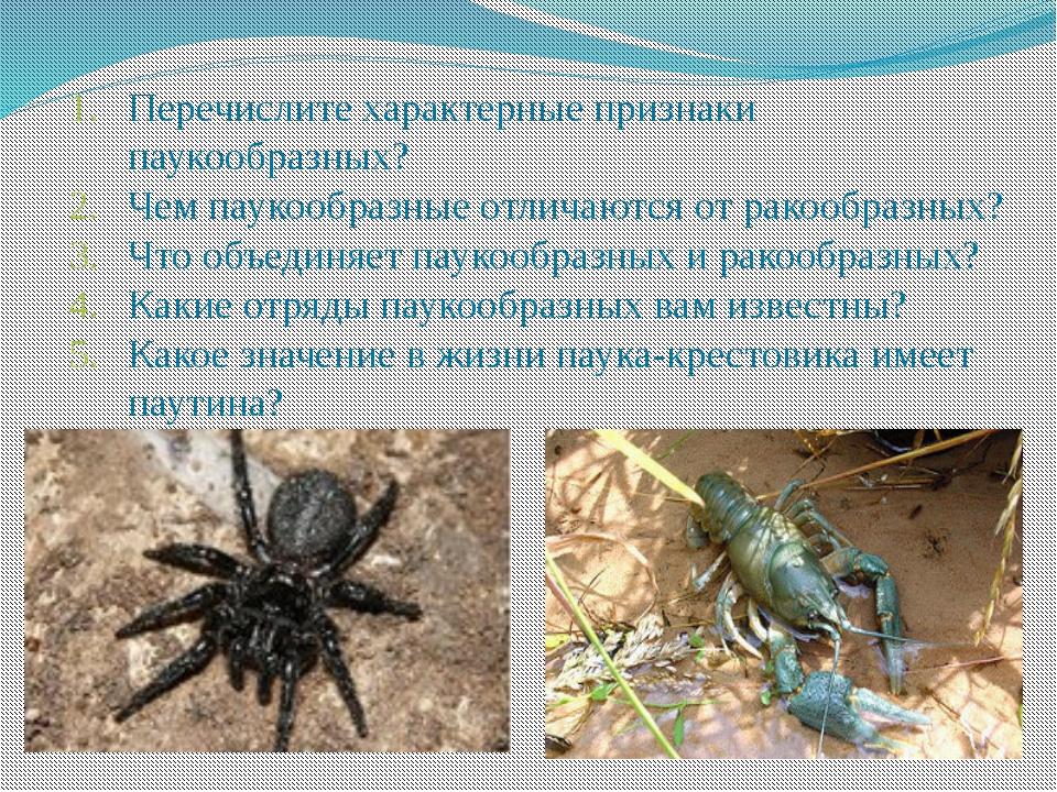 Перечислите характерные признаки паукообразных? Чем паукообразные отличаются...