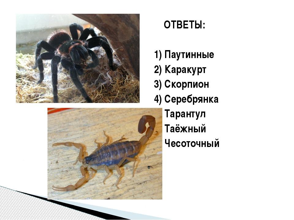 ОТВЕТЫ: 1) Паутинные 2) Каракурт 3) Скорпион 4) Серебрянка 5) Тарантул 6) Та...