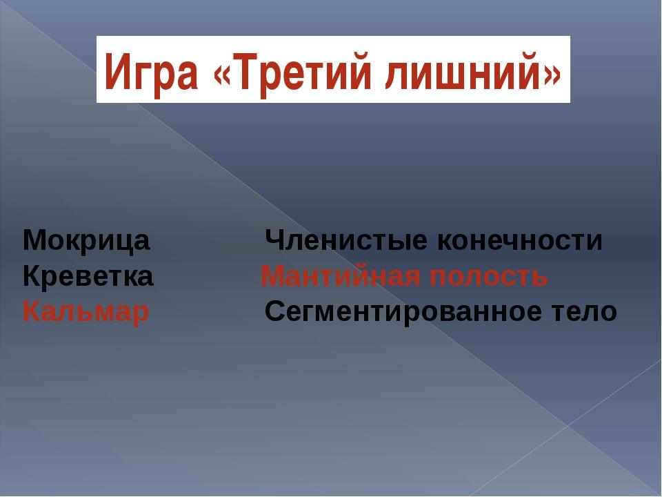 Мокрица Членистые конечности Креветка Мантийная полость Кальмар Сегментирован...