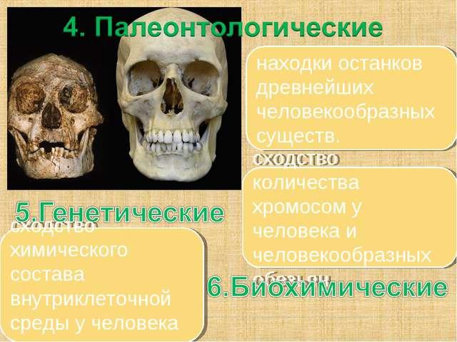 находки останков древнейших человекообразных существ. сходство количества хро...