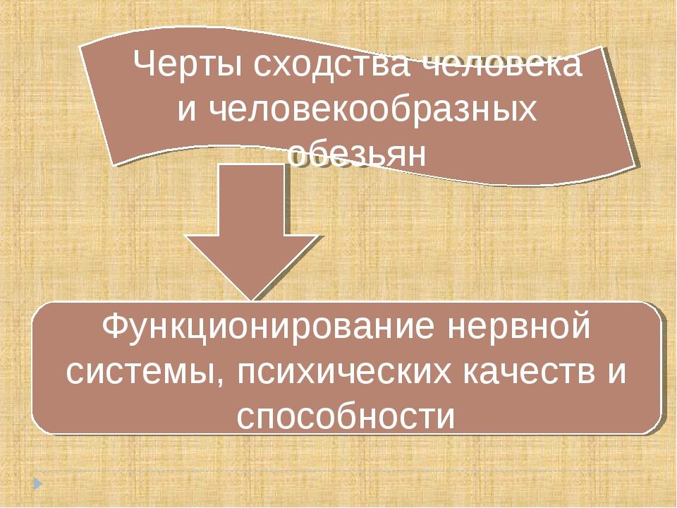Черты сходства человека и человекообразных обезьян Функционирование нервной с...