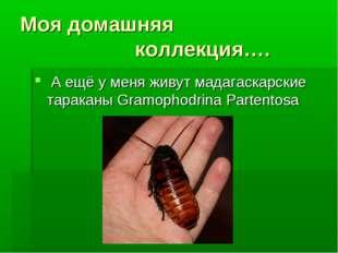 Моя домашняя коллекция…. А ещё у меня живут мадагаскарские тараканы Gramopho