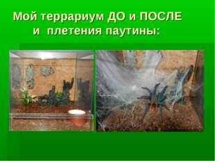 Мой террариум ДО и ПОСЛЕ и плетения паутины: