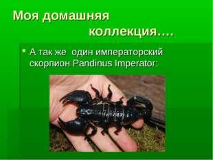 Моя домашняя коллекция…. А так же один имперaторский скорпион Pandinus Impera