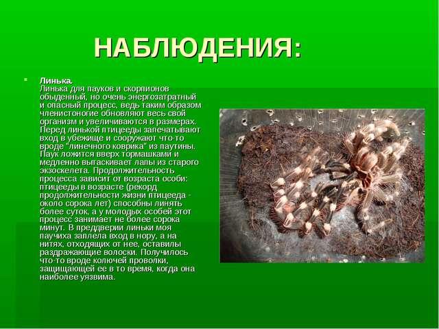 НАБЛЮДЕНИЯ: Линька. Линька для пауков и скорпионов обыденный, но очень энерг...