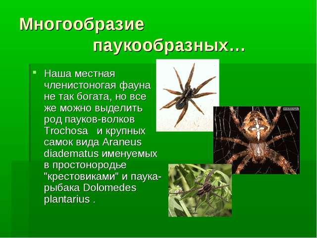 Многообразие паукообразных… Наша местная членистоногая фауна не так богата, н...