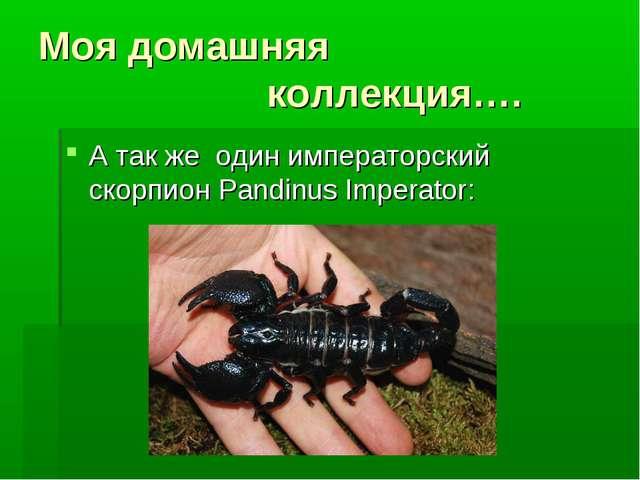 Моя домашняя коллекция…. А так же один имперaторский скорпион Pandinus Impera...