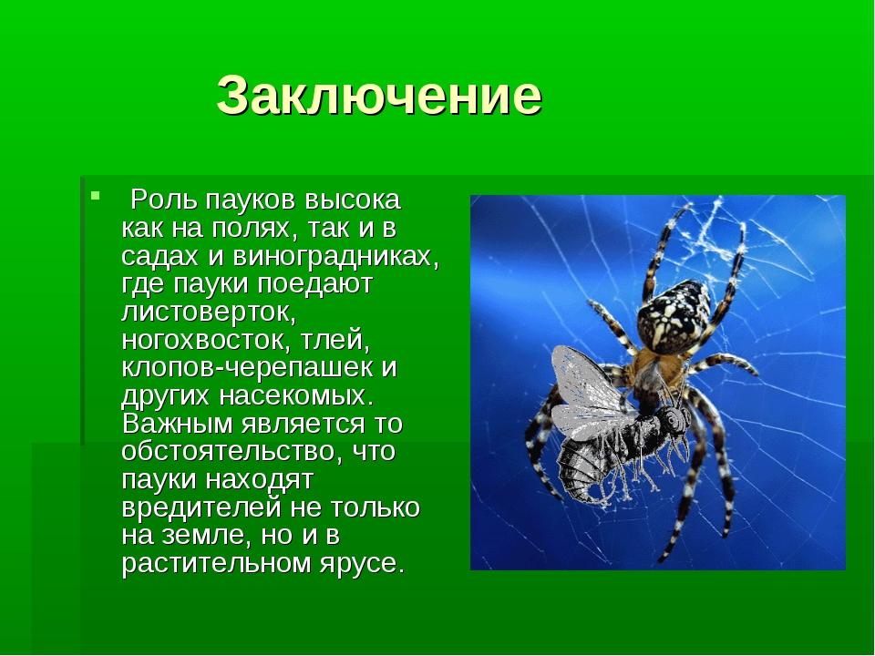 Заключение Роль пауков высока как на полях, так и в садах и виноградниках, г...