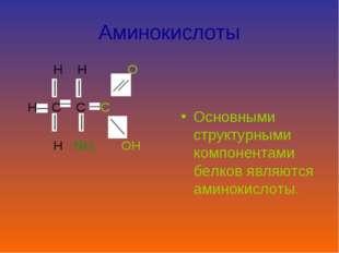 Аминокислоты H H O H C C C H NH2 OH Основными структурными компонентами белко