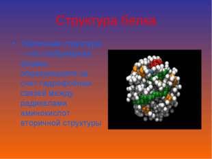 Структура белка Третичная структура – это глобулярная форма, образующаяся за