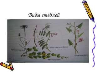 Виды стеблей