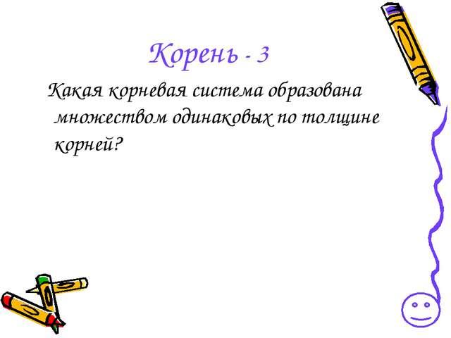 Корень - 3 Какая корневая система образована множеством одинаковых по толщине...