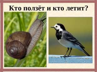 Кто ползёт и кто летит?