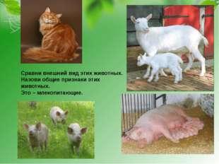 Сравни внешний вид этих животных. Назови общие признаки этих животных. Это –