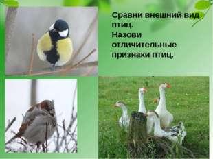 Сравни внешний вид птиц. Назови отличительные признаки птиц.