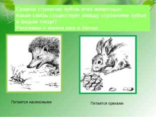 Сравни строение зубов этих животных. Какая связь существует между строением з