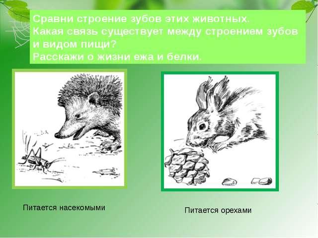 Сравни строение зубов этих животных. Какая связь существует между строением з...