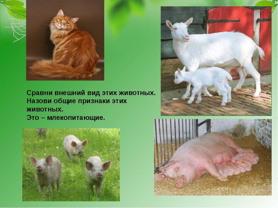 Сравни внешний вид этих животных. Назови общие признаки этих животных. Это –...