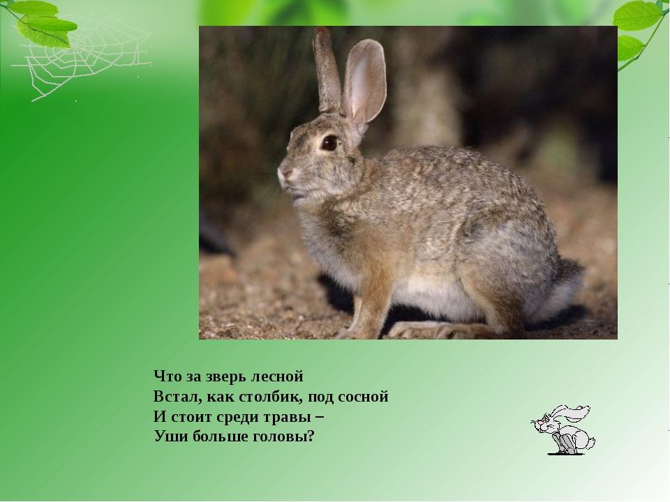 Что за зверь лесной Встал, как столбик, под сосной И стоит среди травы – Уши...