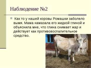 Наблюдение №2 Как то у нашей коровы Ромашки заболело вымя. Мама намазала его