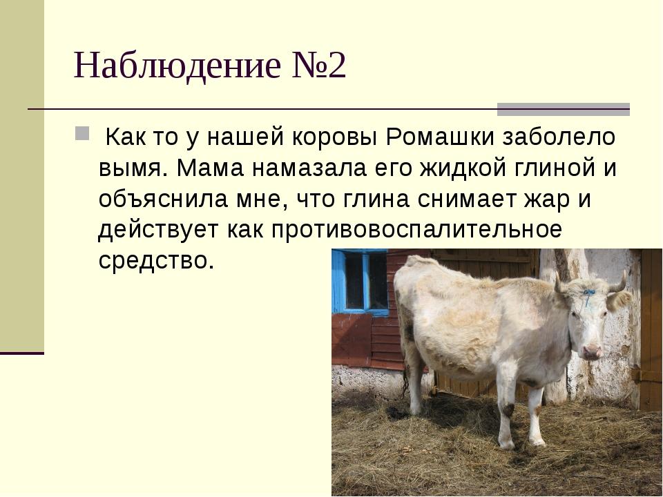 Наблюдение №2 Как то у нашей коровы Ромашки заболело вымя. Мама намазала его...