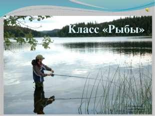 Класс «Рыбы» Презентация к уроку в 7 классе Автор:Коровин С.И.