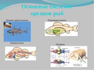 Основные системы органов рыб Опорно-двигательная Пищеварительная Кровеносная