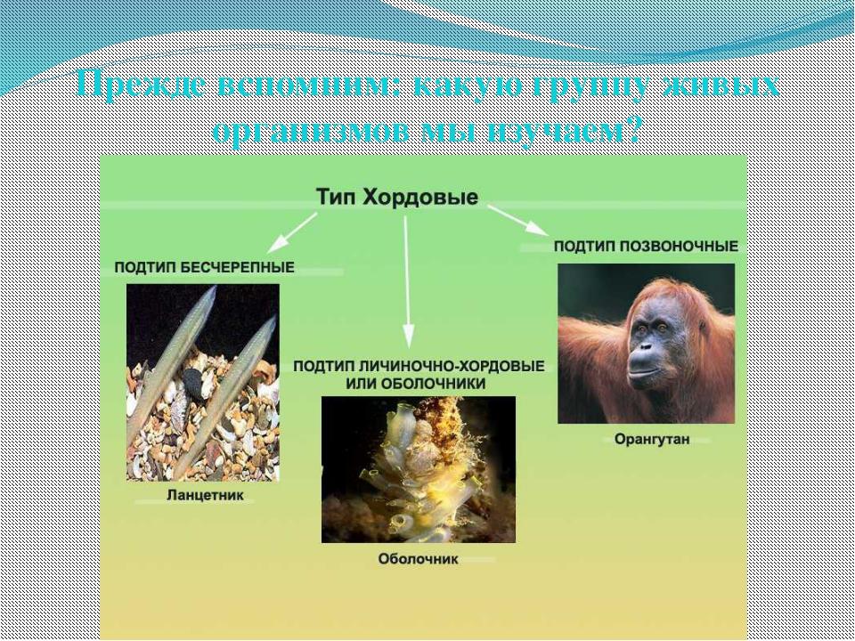 Прежде вспомним: какую группу живых организмов мы изучаем?