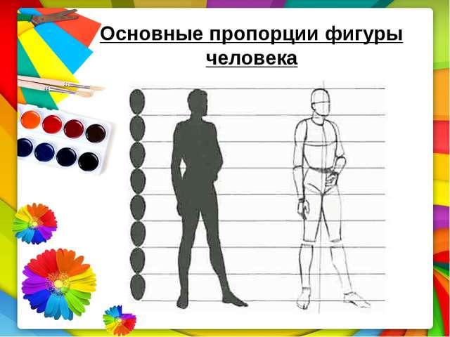 Основные пропорции фигуры человека