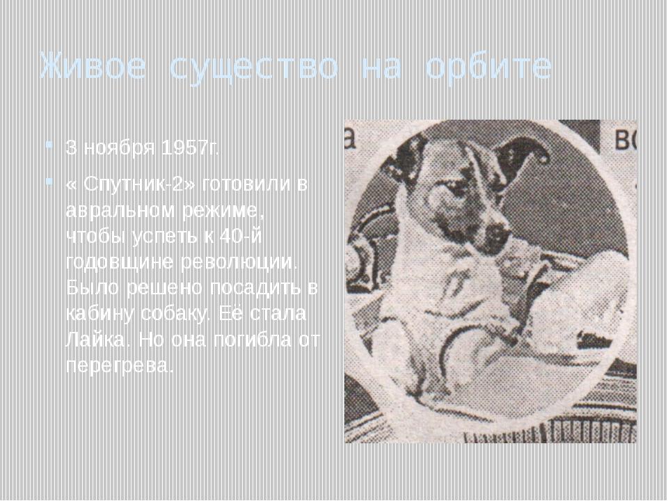 Живое существо на орбите 3 ноября 1957г. « Спутник-2» готовили в авральном ре...