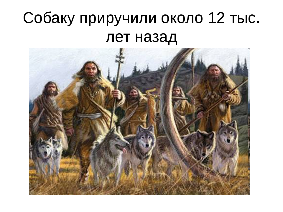 Собаку приручили около 12 тыс. лет назад