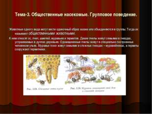 Тема-3. Общественные насекомые. Групповое поведение. Животные одного вида мог