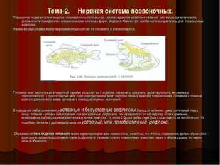 Тема-2. Нервная система позвоночных. Повышение подвижности и энергии жизнедея