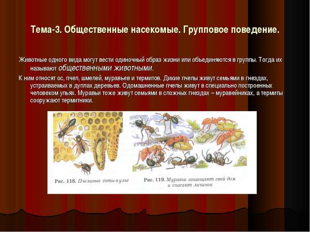 Тема-3. Общественные насекомые. Групповое поведение. Животные одного вида мог...