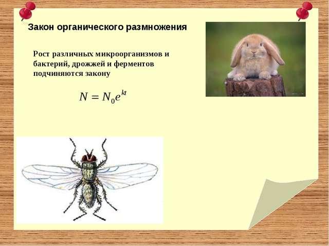 Закон органического размножения Рост различных микроорганизмов и бактерий, д...