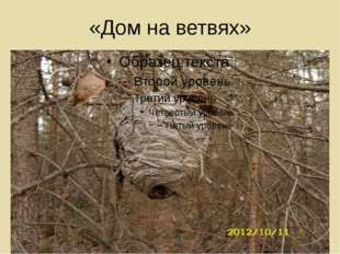 «Дом на ветвях»