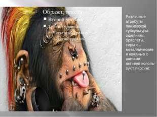 Различные атрибуты панковской субкультуры: ошейники, браслеты, серьги – метал